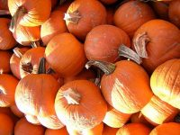 Our Not-so-Scary Halloween Events Roundup