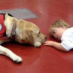 Register this month for FREE eye exams for service dogs